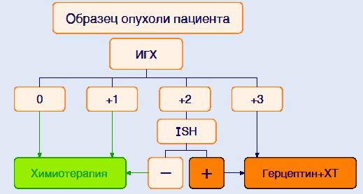 Алгоритм определения статуса HER2 при распространенном раке желудка и пищеводно-желудочного перехода