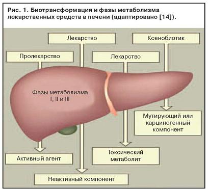 Контакт по гепатиту а мкб 10