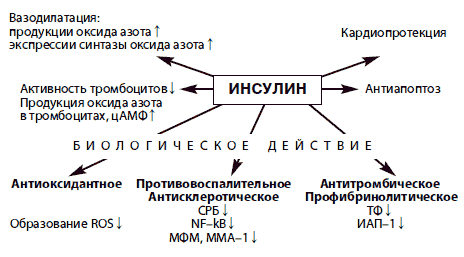 Рис. 1. Биологическое действие инсулина