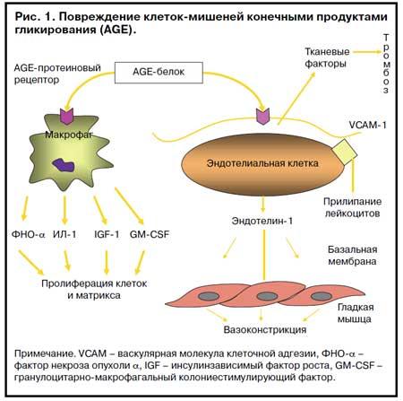 Сахарный диабет типа 2: возможность профилактики микрососудистых ...