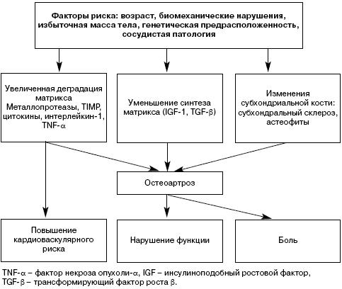 Основные звенья патогенеза ОА