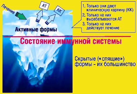 «Айсберговый» тип существования хронических инфекций